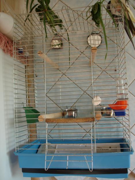 Клетка для попугаев корелла своими руками